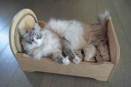 cucce in legno per gatti